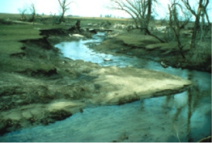 floodRestoration-riparian