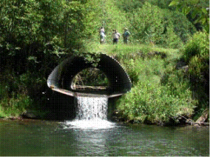 floodRestoration-fishPassage