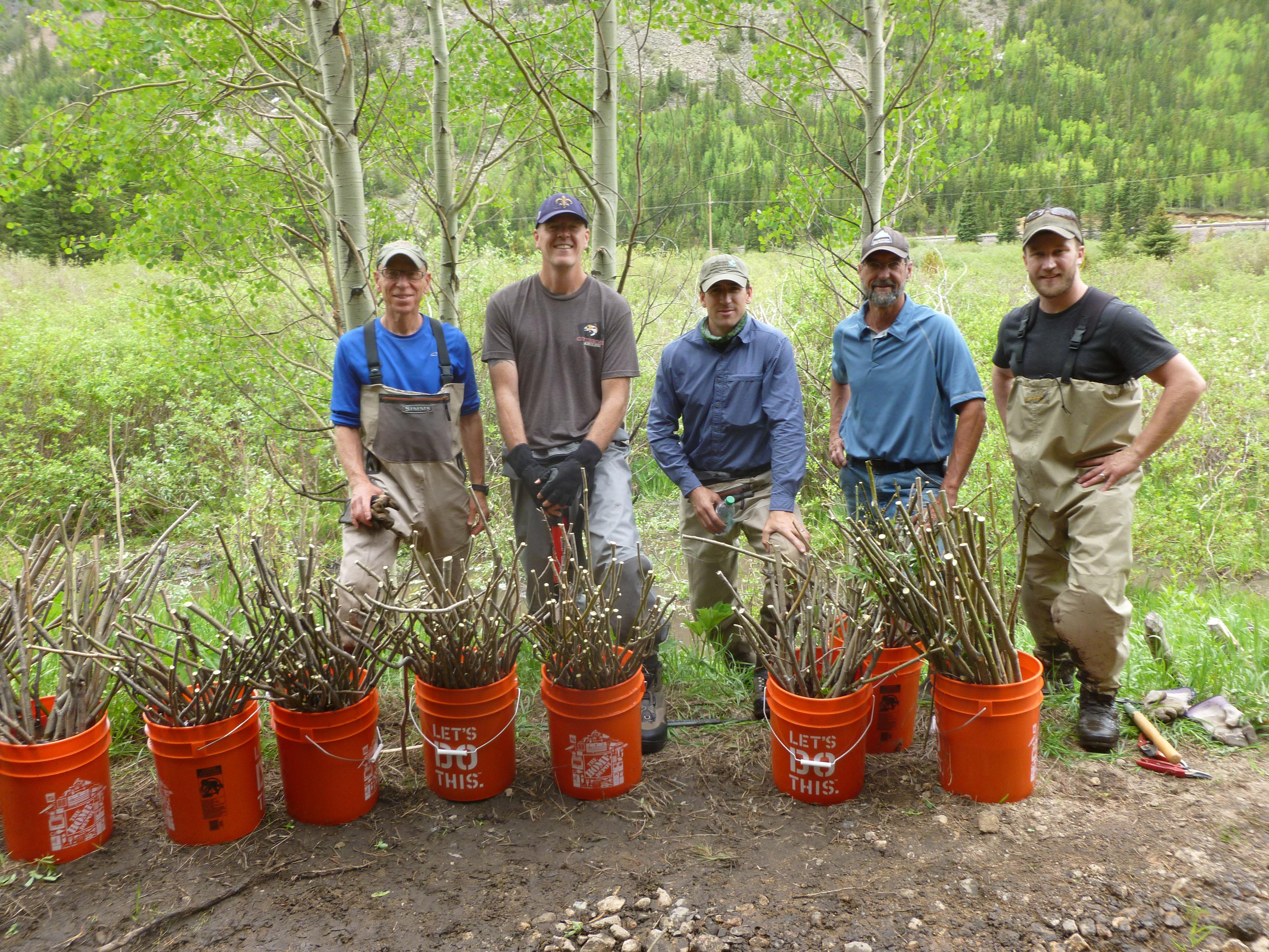 willowssmall